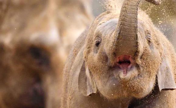 大象.PNG